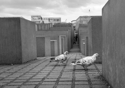 Tauben im Holocaust Mahnmal